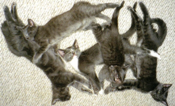 Kittens Born Upon My Chest – Part One